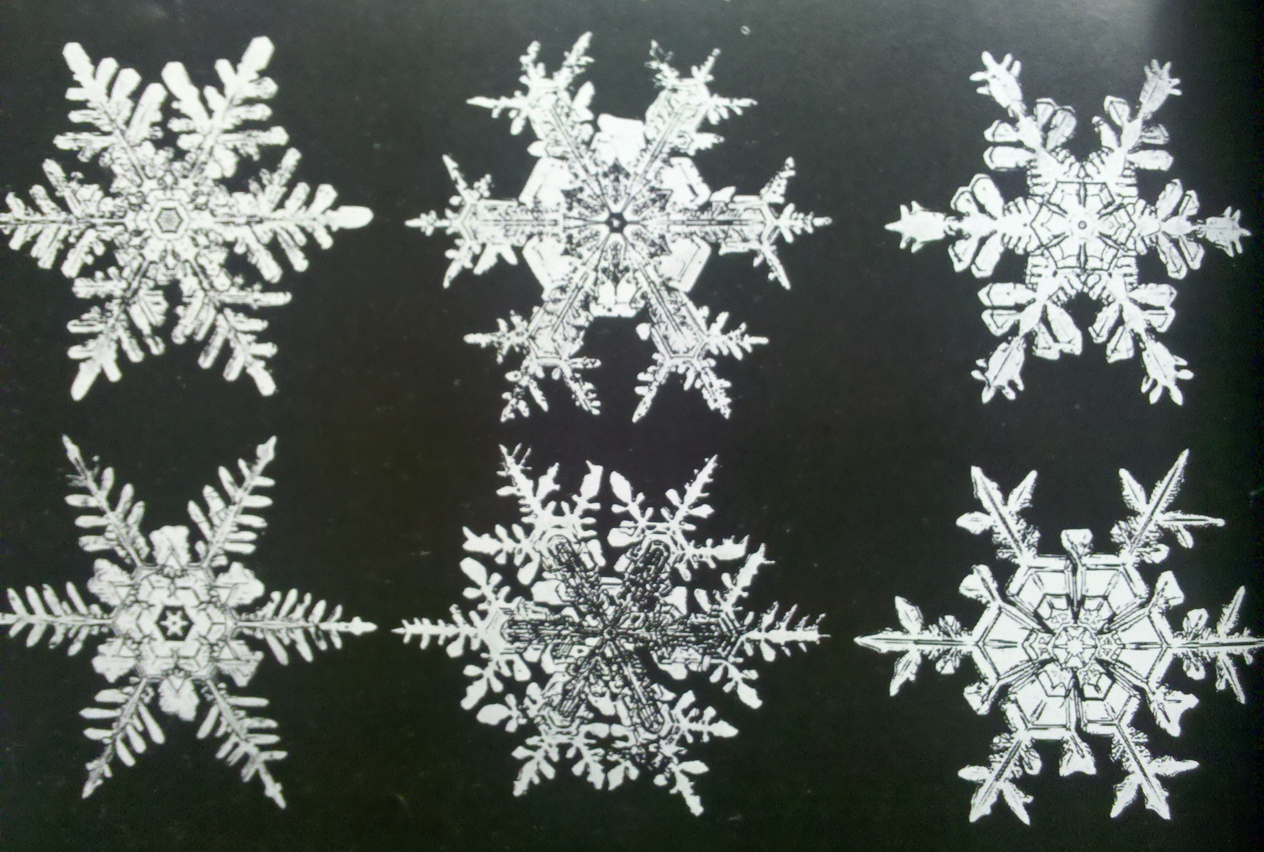 snowflakes archive mary book azarian martin photographs briggs in snowflake dp pictorial jacqueline dover bentley ac